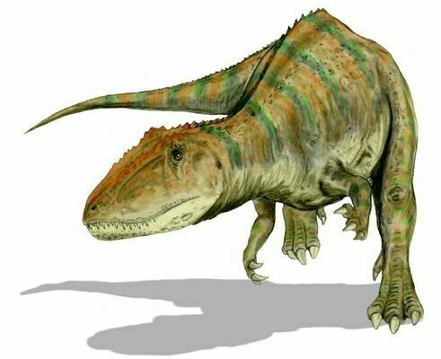 An artists reconstruction of Carcharodontosaurus.  By Nobu Tamura